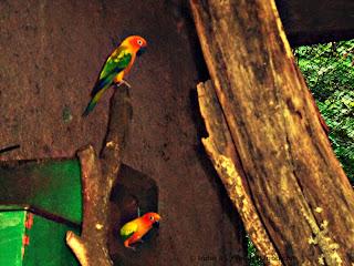 sun conure parrot peeking out of nest