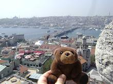 Teddy Bear in Istanbul