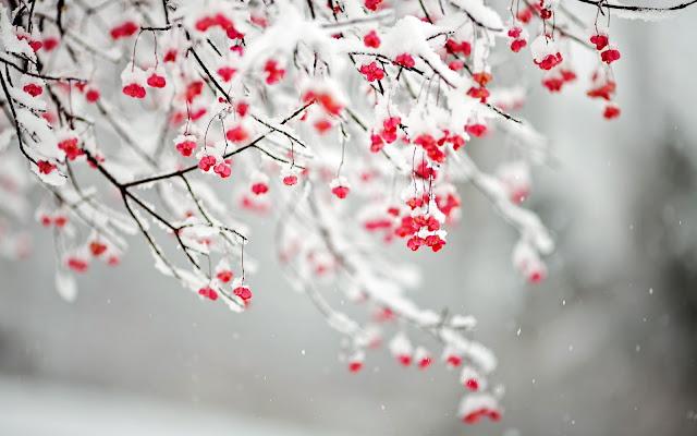 Hình nền mùa đông đẹp nhất - ảnh 11
