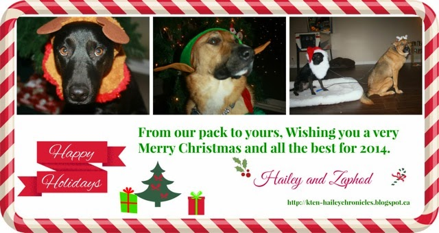 xmas card from Hailey&Zaphod