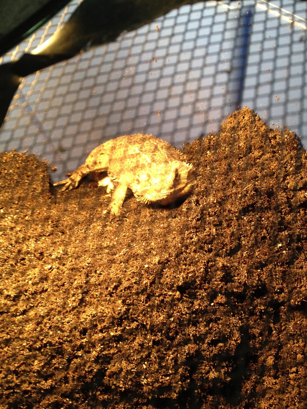 A few Questions about Bearded Dragons..?