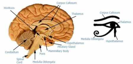 THE 'EYE OF HORUS' IS THE '3RD EYE'