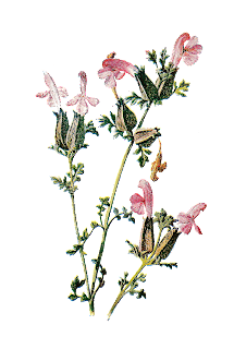 printable flower image