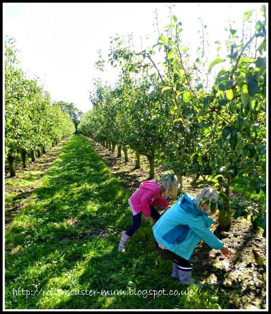 Picking apples - Blackmoor Estate