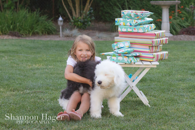 Shannon Hager Photography, Old English Sheepdog, Birthday