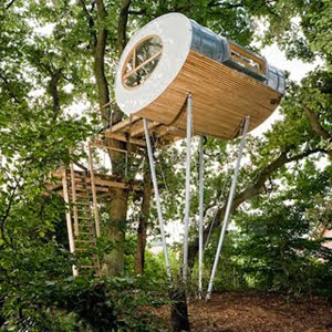 Tree House On Oaks