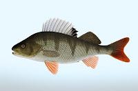 Vad har du fått för fisk?