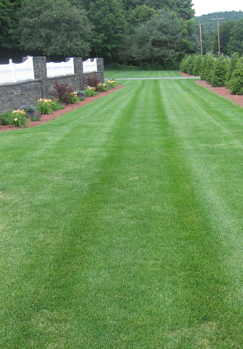 Snow sons landscaping lawn mowing 5 tips for healthier for How often should you mow your lawn