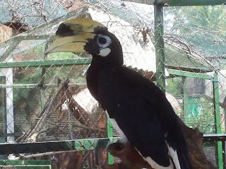 burung di bird park gili meno