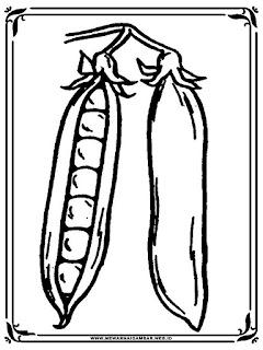 mewarnai gambar buah kacang polong