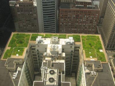 Terase verzi la Primaria Chicago