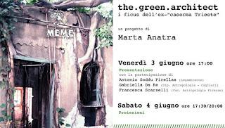 Ficus Cagliari