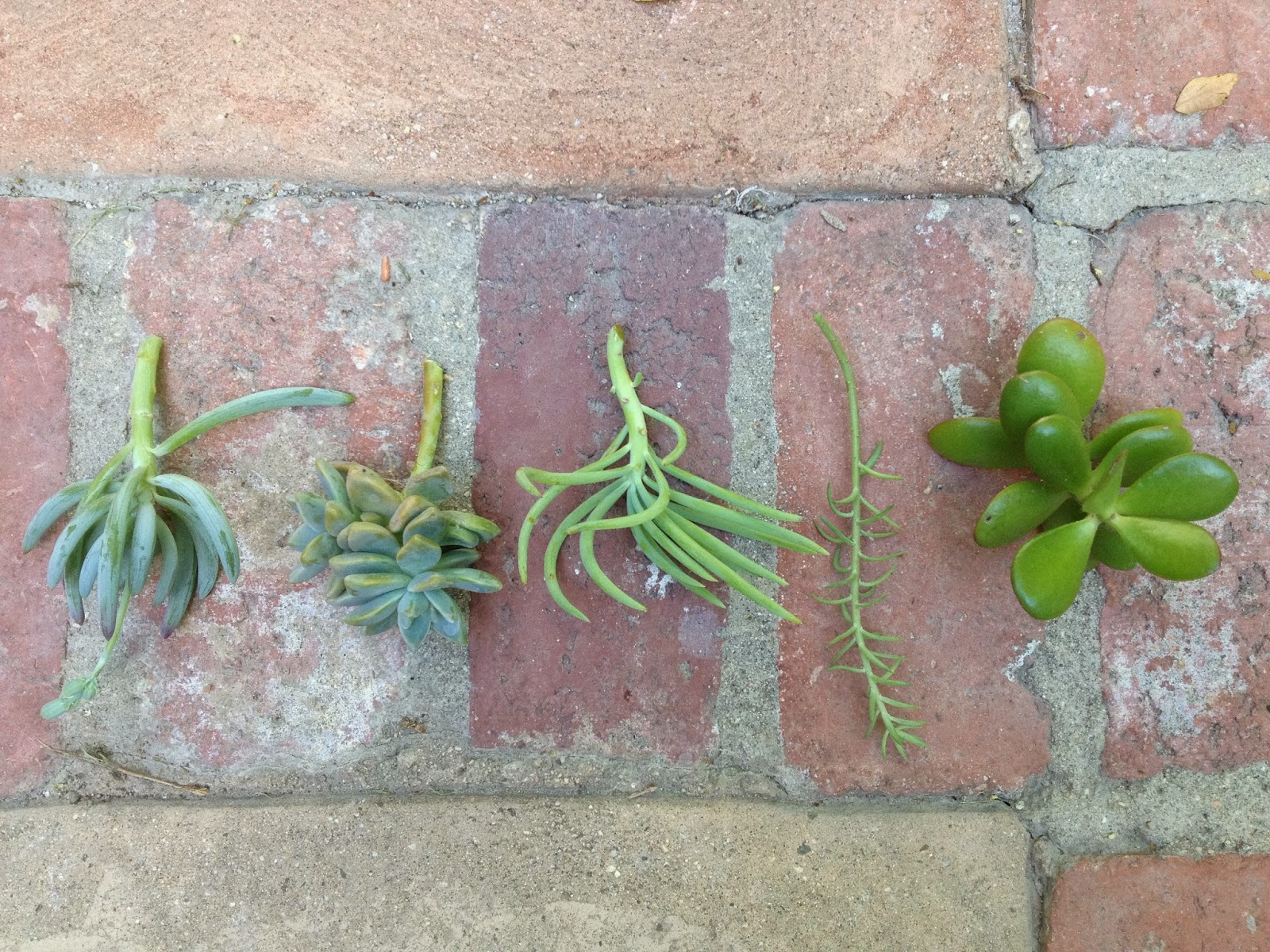 Planting Succulents for the Home and Garden
