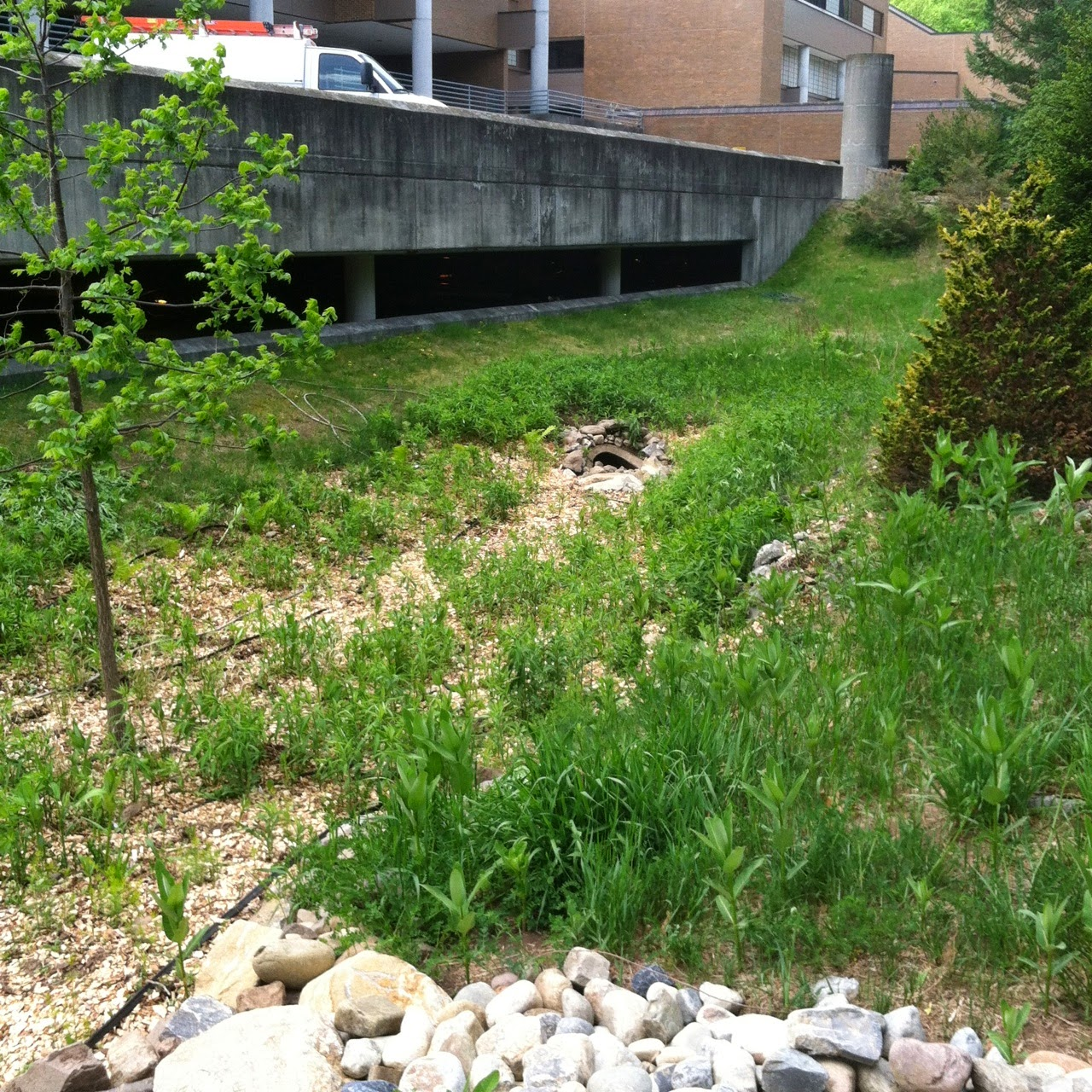 Green Stormwater Infrastructure Grant Project: Rain Garden Progress