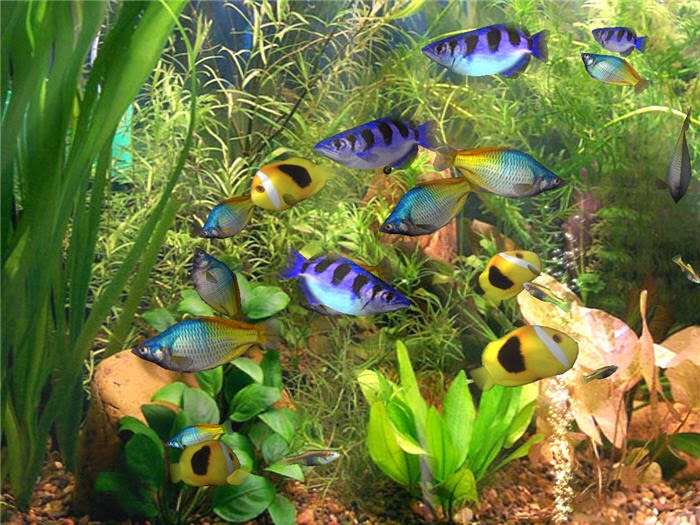 marine aquarium screensaver for ubuntu
