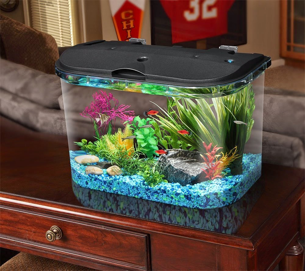Spiffy pet products dwarf frog tank setup for Cat proof fish tank