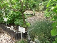 漢方の葛根湯の植物