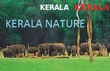 KERALA NATURE