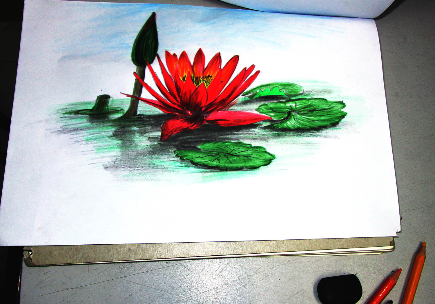 3d Color Sketch Of Water Lily Museum Of Art Graphics