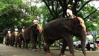 sewa mobil taman safari