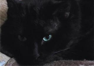 Черный пушистый кот