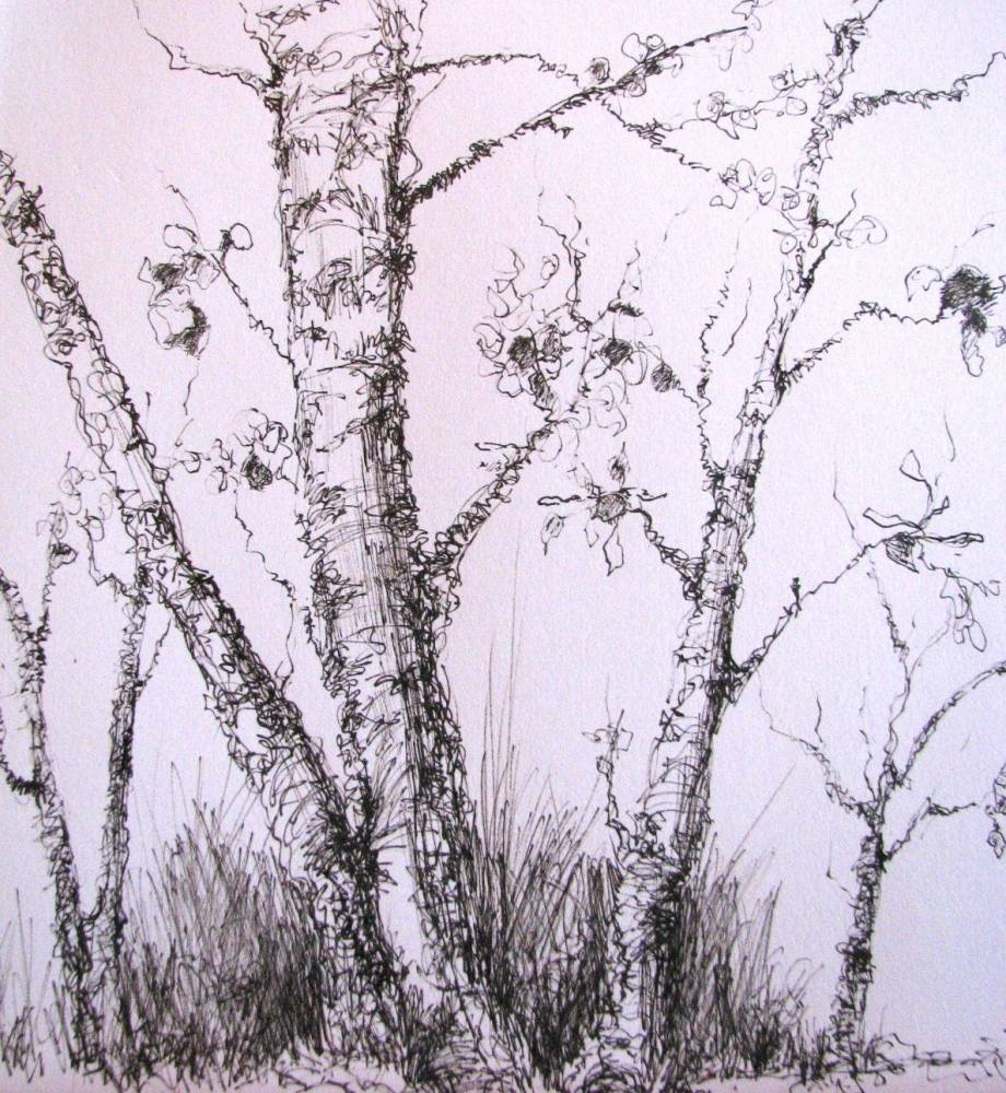 Pen and ink drawing tree study by canadian artist kim blair