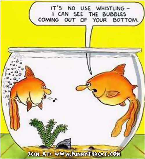 Funny fish jokes - photo#3
