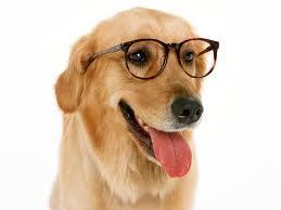 Habilidades y destrezas de tu perro