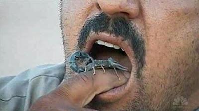 iraqi-farmer-scorpions
