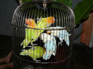 info alamat penting info harga burung lokal dan impor perlu