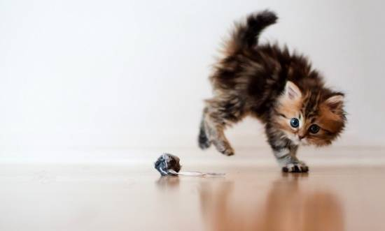 gambar-anak-kucing-comel
