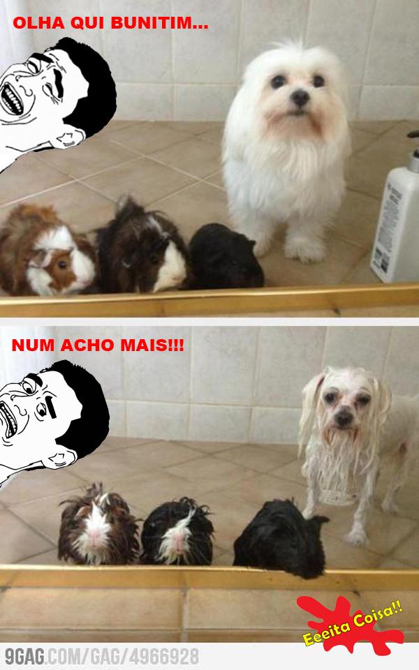 bunitim, fofo, cachorro, oh wait, yao ming, eeeita coisa