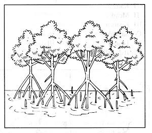 Hutan Paya Bakau