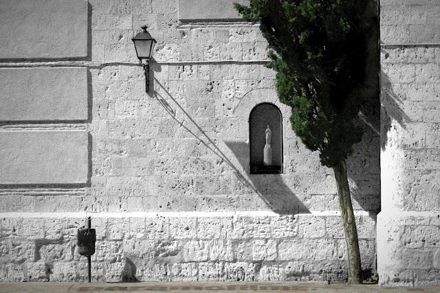 Un ciprés, 2012 (cc) Abbé Nozal