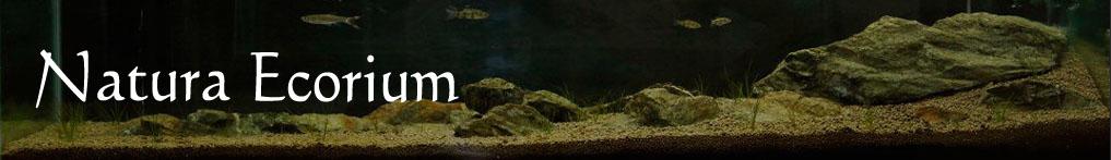 Natura Ecorium Aquarium Plants Kuching