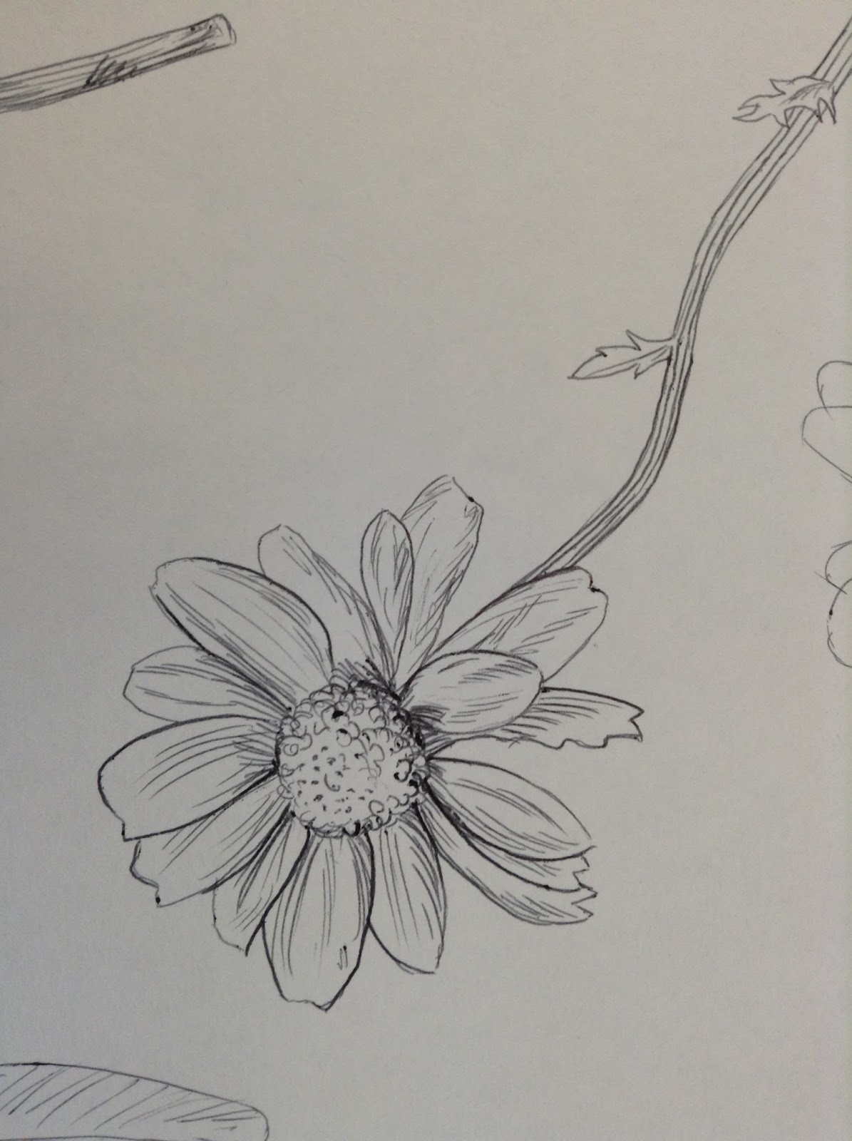 Line Drawing Natural Forms : A textiles floral drawings lesson