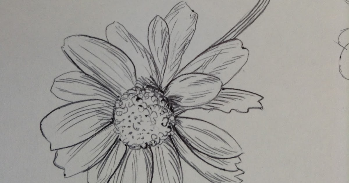 Daisy Flower Line Drawing : A textiles floral drawings lesson