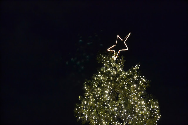 yountville, california, christmas, lights, tree