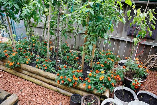 Urban Backyard Golden : Backyard Urban Farm Company