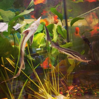 аквариум рыбы зоомагазин