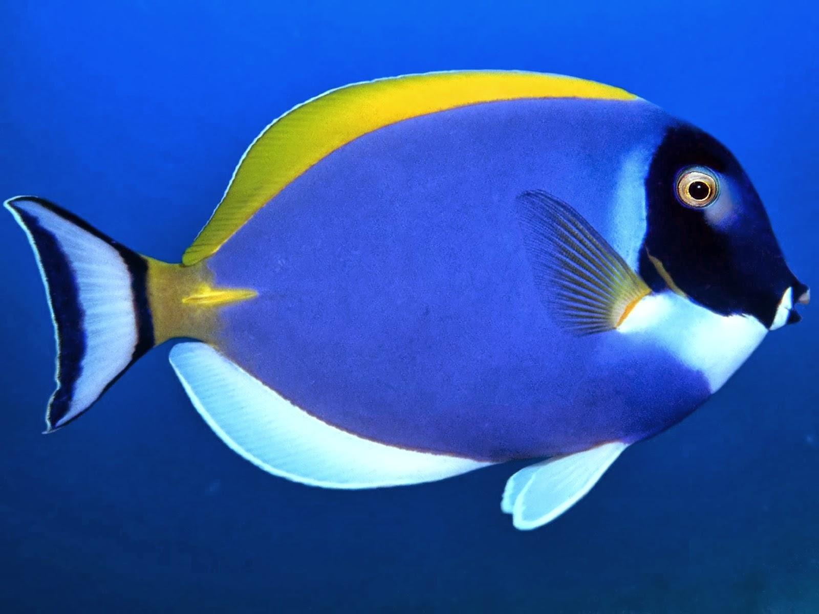new Fish Full HD Wallpaper