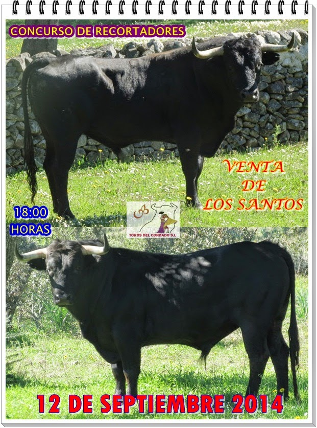 DOS ESPECTACULARES TOROS CUATREÑOS QUE PRESENTO TOROS DEL CONDADO S.L EN 2014, PARA RE-CORTADORES .