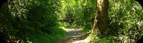 http://2.bp.blogspot.com/-ZccXci4dCNs/TjwKKb51IoI/AAAAAAAAAIE/5rF58LDV2LQ/s1600/bosque.jpg