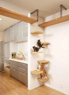 foto 2...Conosco 2 gatti che farebbe le capriole per una casa così...
