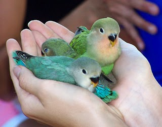 Love Animated Pictures on Very Sweet And Cute Animals  Love Birds Animation