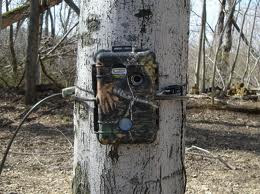 Trap camera great idea