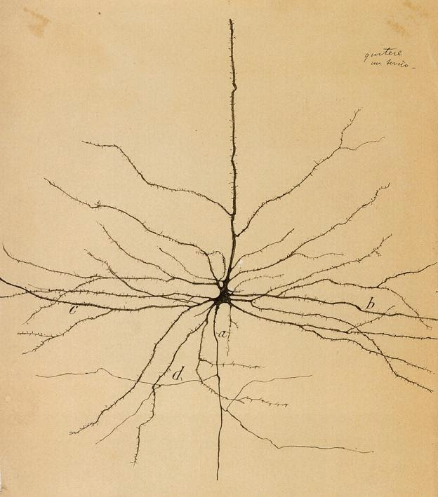 Image: An 1800's linework mapping of a neuron. At center is a large structure with one thick primary tendril moving upwards. Many other smaller tendrils come off the the central structure and branch outwards.