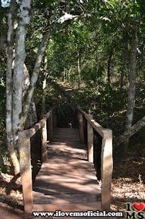 Caminho para a Lagoa Misteriosa. Foto: I Love MS