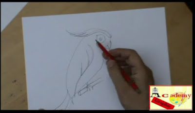 disegnare il pappagallo