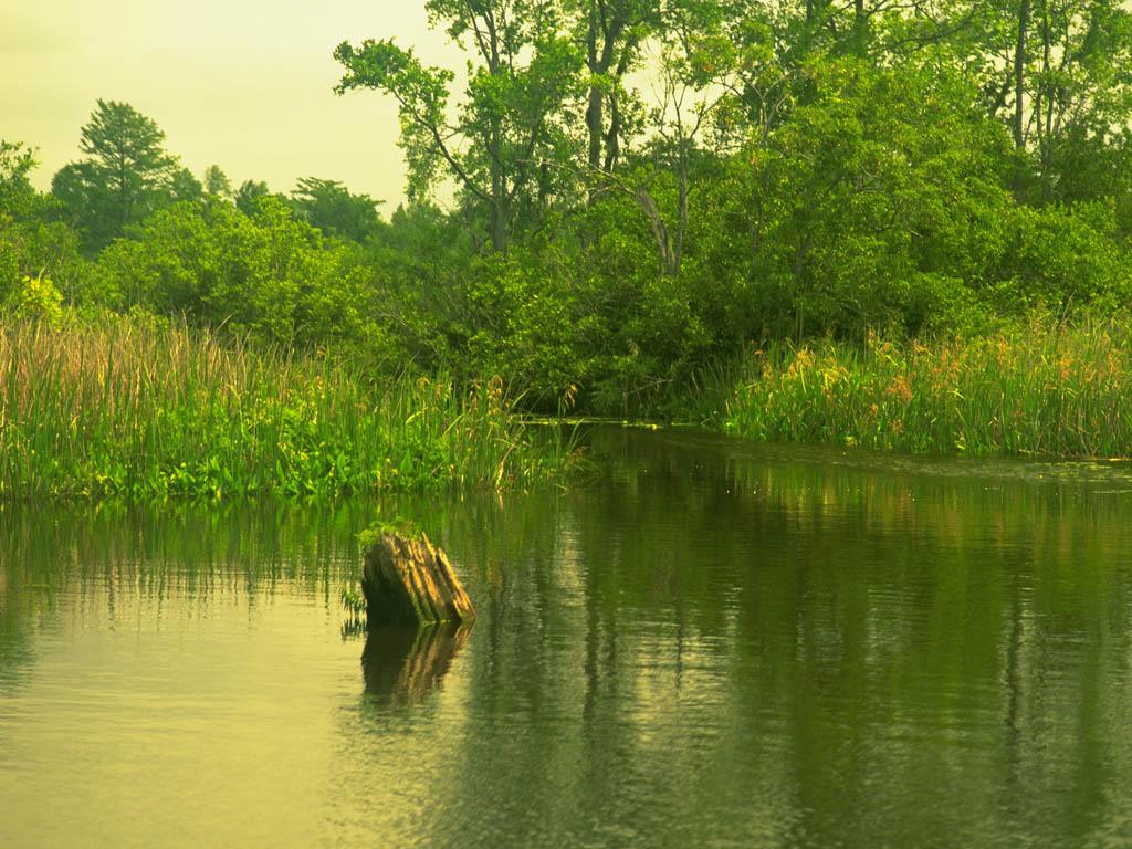 http://2.bp.blogspot.com/-ZeViYAiox98/T9dKzL94JNI/AAAAAAAAARA/NSHS0VBUleo/s1600/lake-nature-wallpaper.jpg